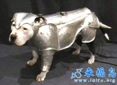黄金甲狗狗