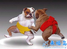 狗狗相撲手