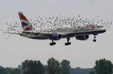 这架飞机飞的挺悬的