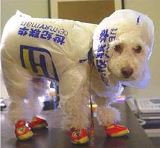 狗狗的雨衣