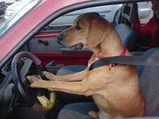 刚考出驾照,上街溜一圈去