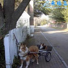 狗狗的三轮车
