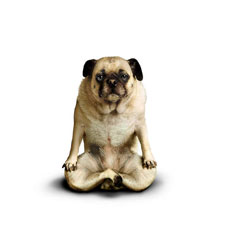 The dog yoga
