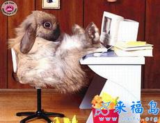 兔女郎热线