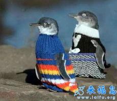 这下不怕冷啦!