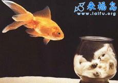 金鱼的心愿