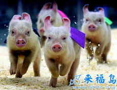 小猪快跑!