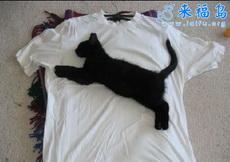 PUMA牌T-shirt