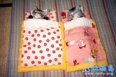 小猫猫的小棉被