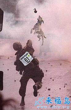 搞笑军事贴图