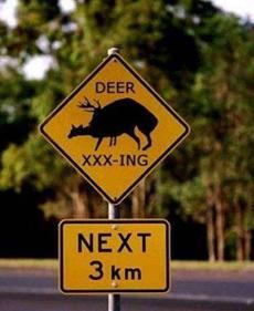前方三公里处,鹿在XXOOing
