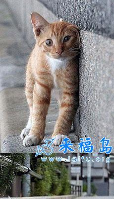 搞怪小猫咪