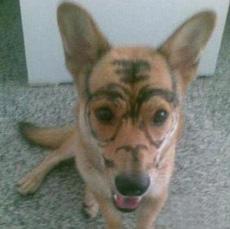 My pet--tiger