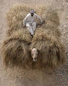 可怜的骆驼