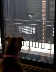 两情若是久长时,又岂在隔层窗户纸?