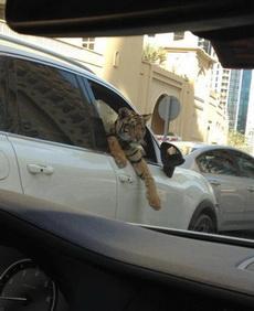 据说是在迪拜所摄!!!
