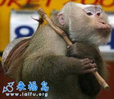Feral Monkey