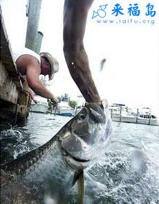 用手都能钓鱼