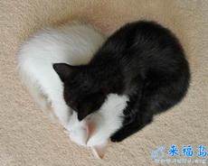 白猫与黑猫