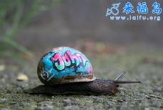 蜗牛壳上的涂鸦