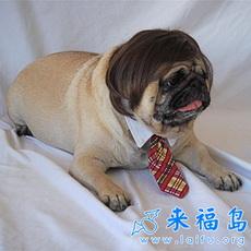 Wiggles Dog Wigs