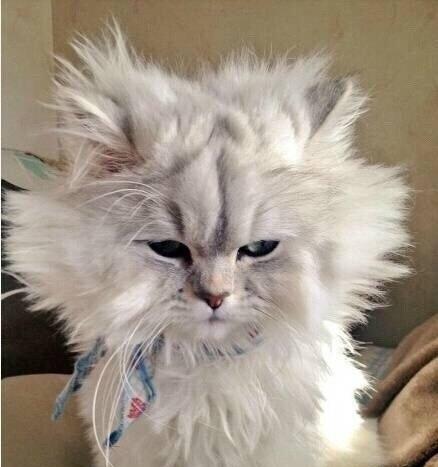每次头发还没干就睡觉了,早上醒来后就变成了这个样子[动物图片]