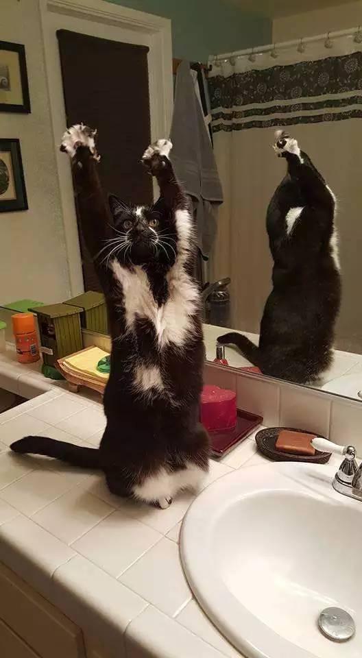举起手来[动物图片]