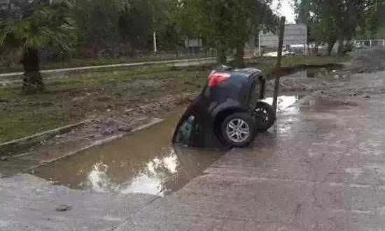 這是一只在河邊飲水的野生轎車