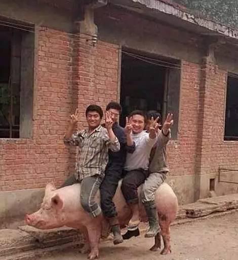 你们准备骑着猪去哪里玩啊?
