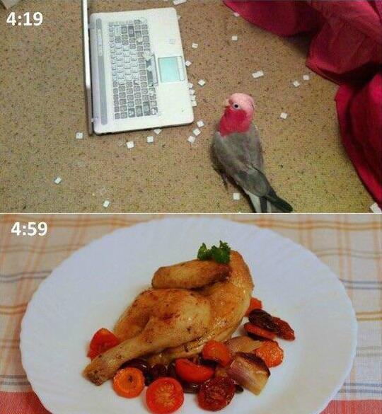 假的,鹦鹉肉没这么多