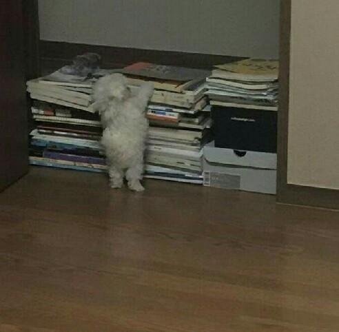 我昨天看的书放哪了?