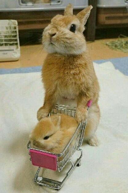 妈妈带你买好吃的去[动物图片]