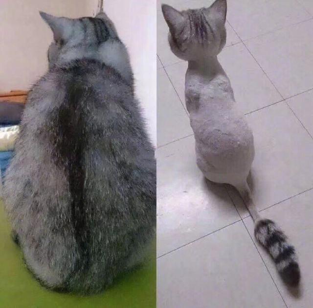 一個虛胖boy