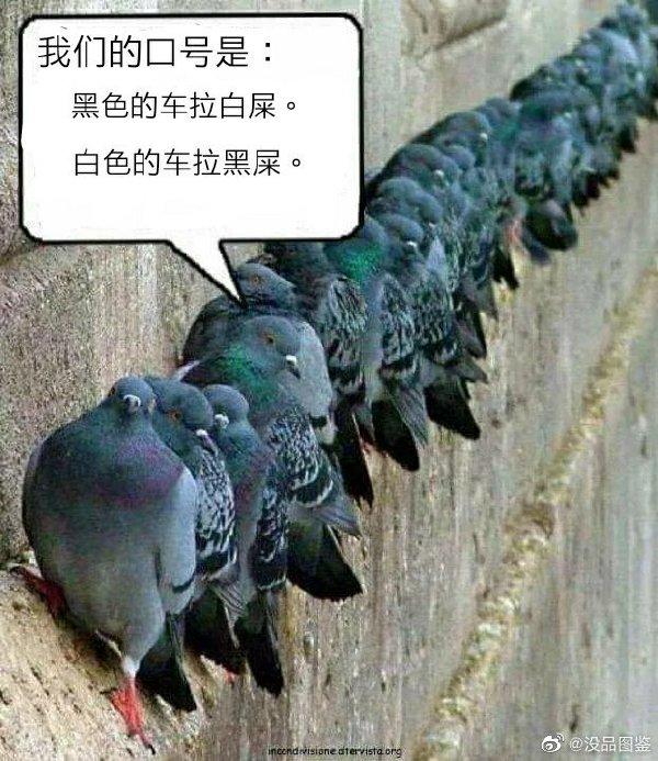 不管什么鳥不都是黑白相間