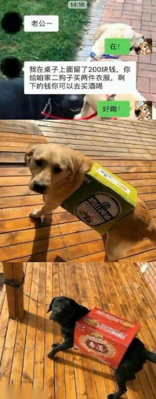 狗子:我TM谢谢您咧