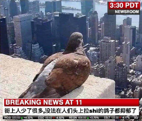 鸽子都抑郁了