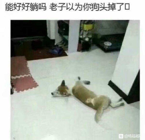 每次回家都以為自己的狗掛了