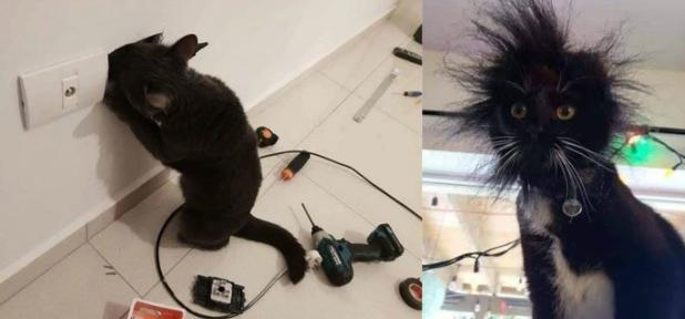 好奇害死貓